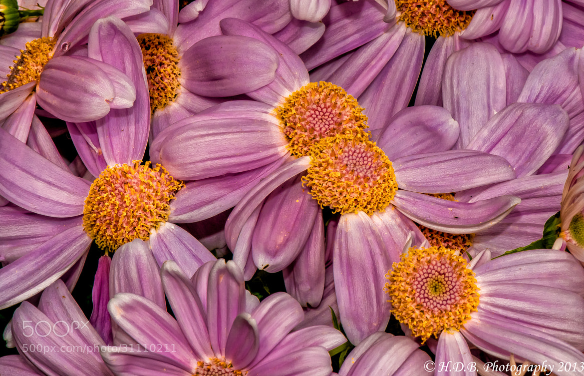 Photograph Pretty In Pink by Harold Begun on 500px