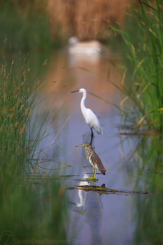 Photograph A Wetland in its owl Perspective by Saurabh Desai on 500px