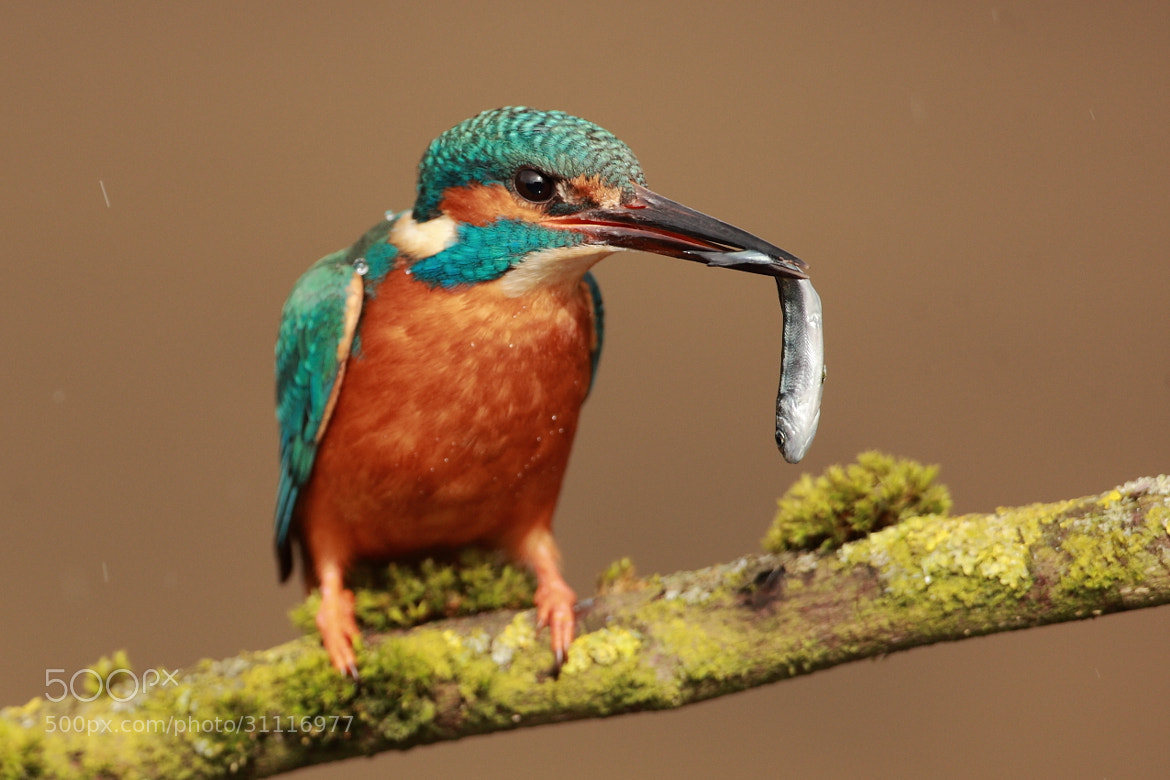 Photograph Dinner time by John Betts on 500px