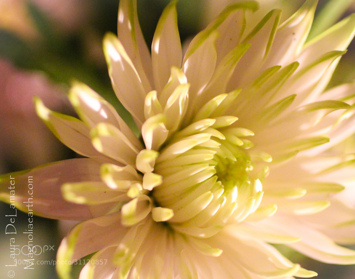 Photograph Nature's Tutu by Laura DeLamater on 500px