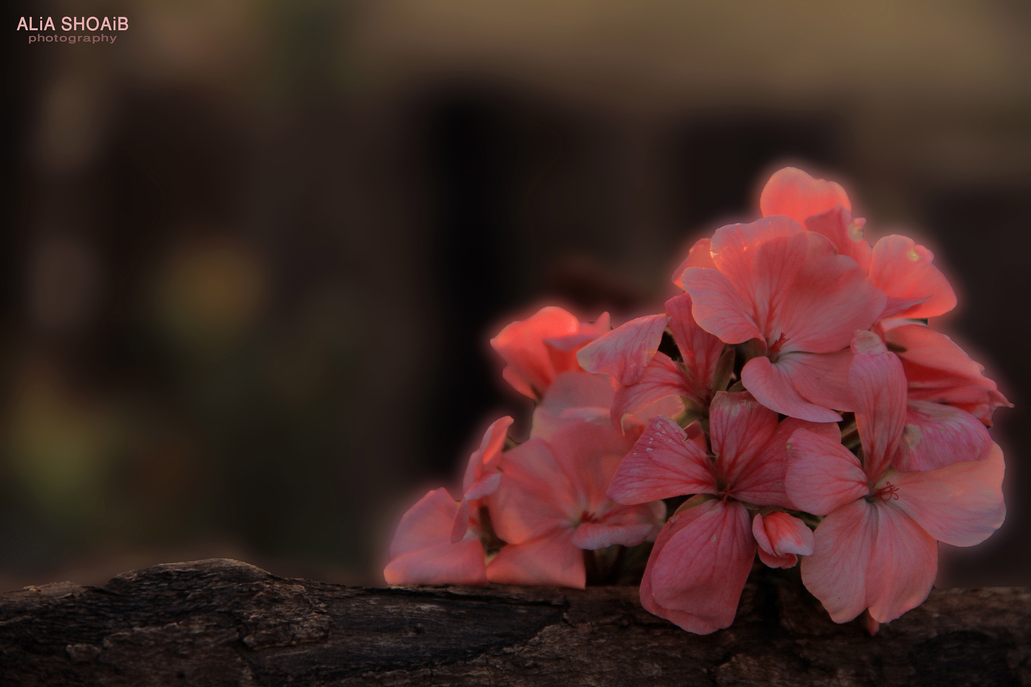 Photograph pink flowers by ALiA Shoaib on 500px