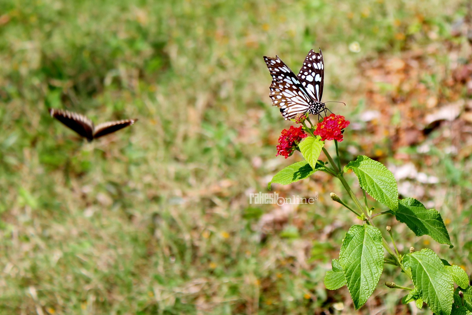 Photograph  ButterFly by Rakesh R on 500px