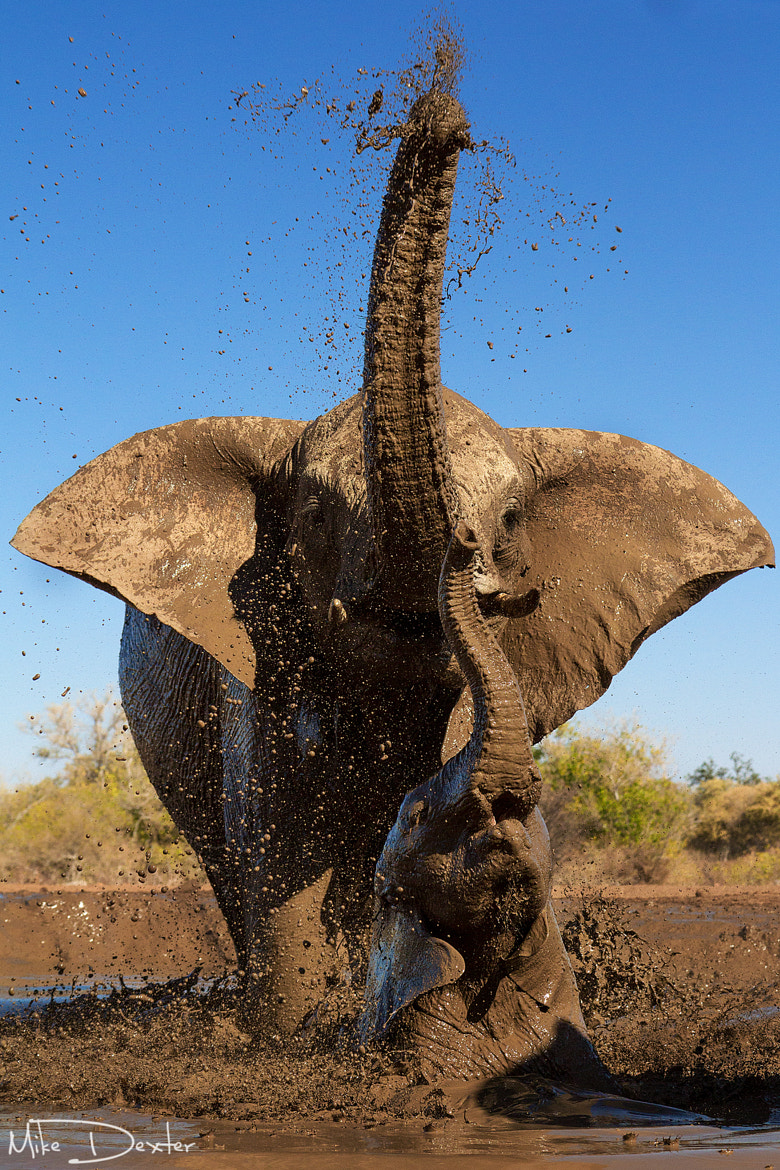Photograph Elephant mother and calf by Mike Dexter on 500px