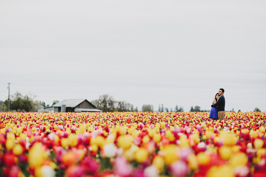 Love & Tulips  by Sara K Byrne on 500px.com