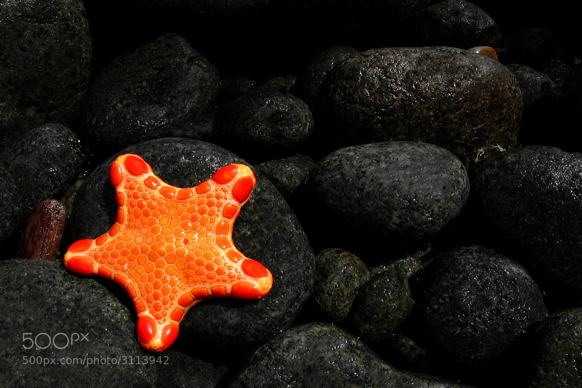 Photograph Star of the Sea by Peter Daalder on 500px