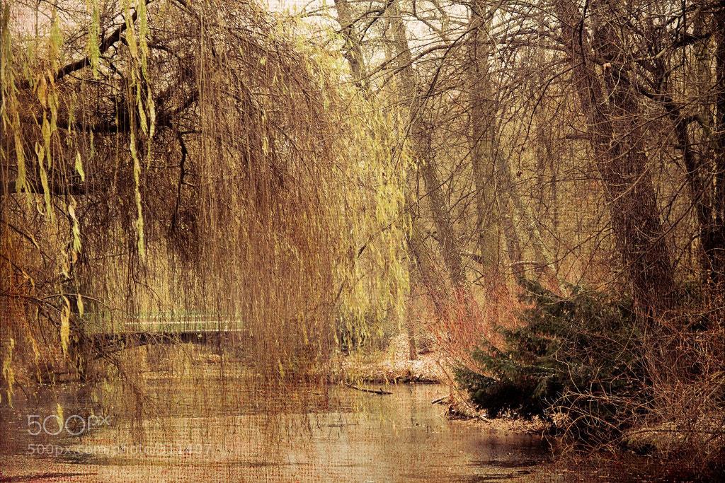 Photograph Tiergarten by Maxi Kohan on 500px