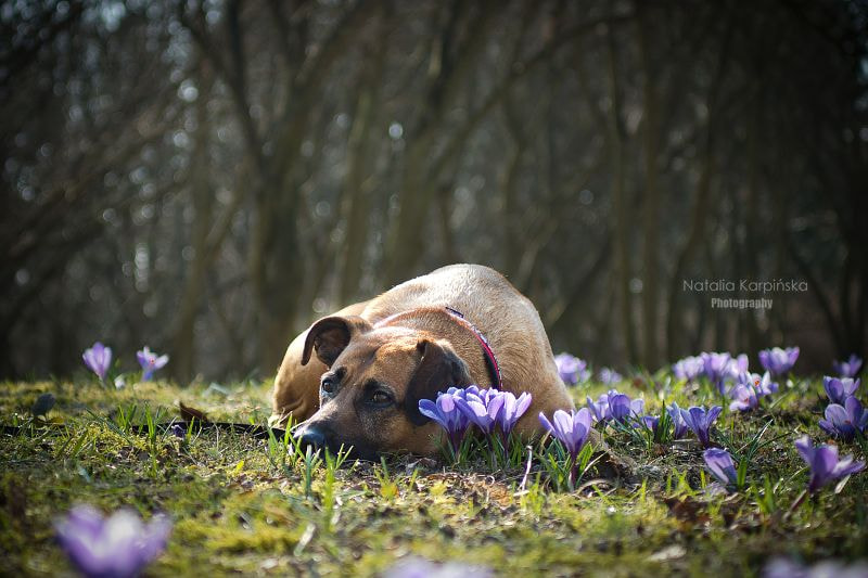 Photograph Spring is here by Natalia Karpinska on 500px