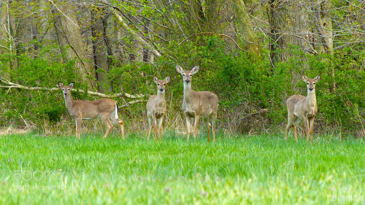 Photograph The Deers by Christine Rica Bryant on 500px