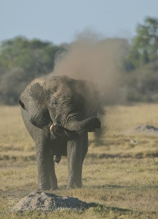 Taken in where else but Hwange National Park, Zimbabwe