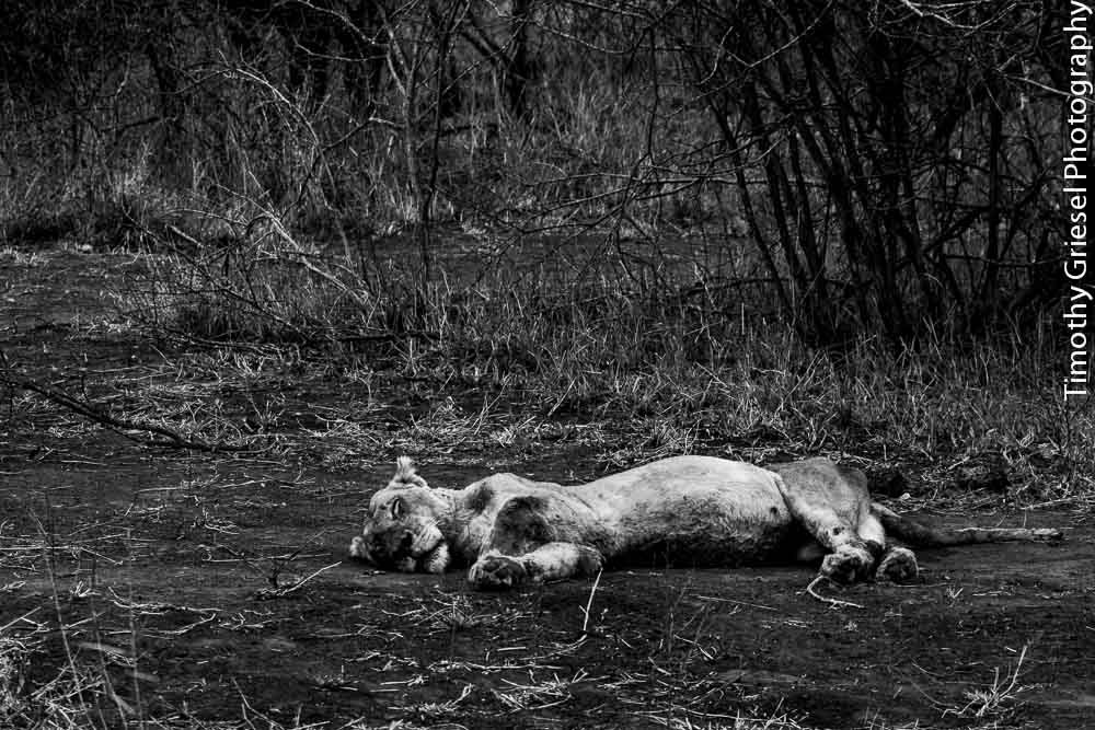 Photograph Death comes naturally by Timothy Griesel on 500px