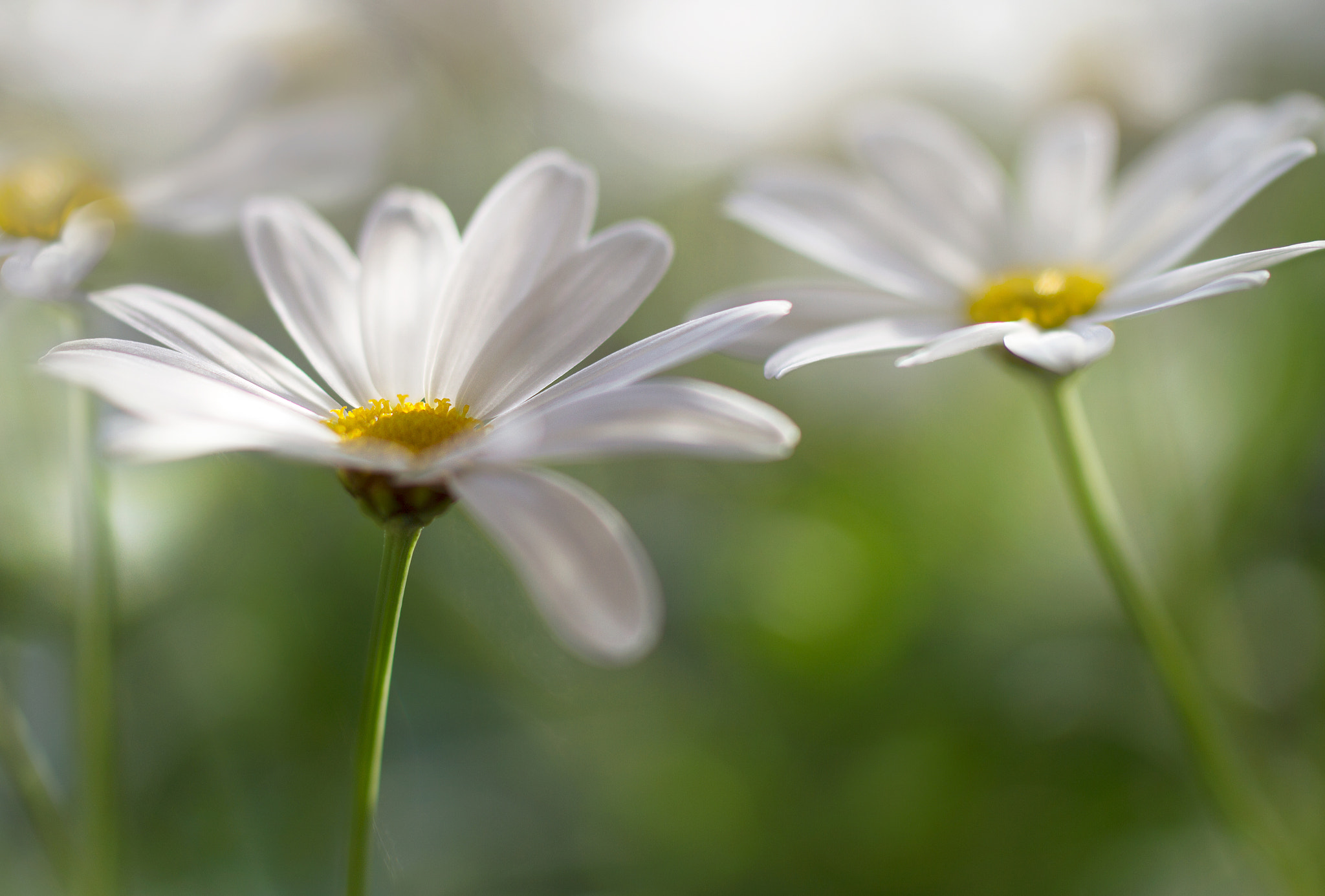Photograph Summer sweet by Mandy Disher on 500px