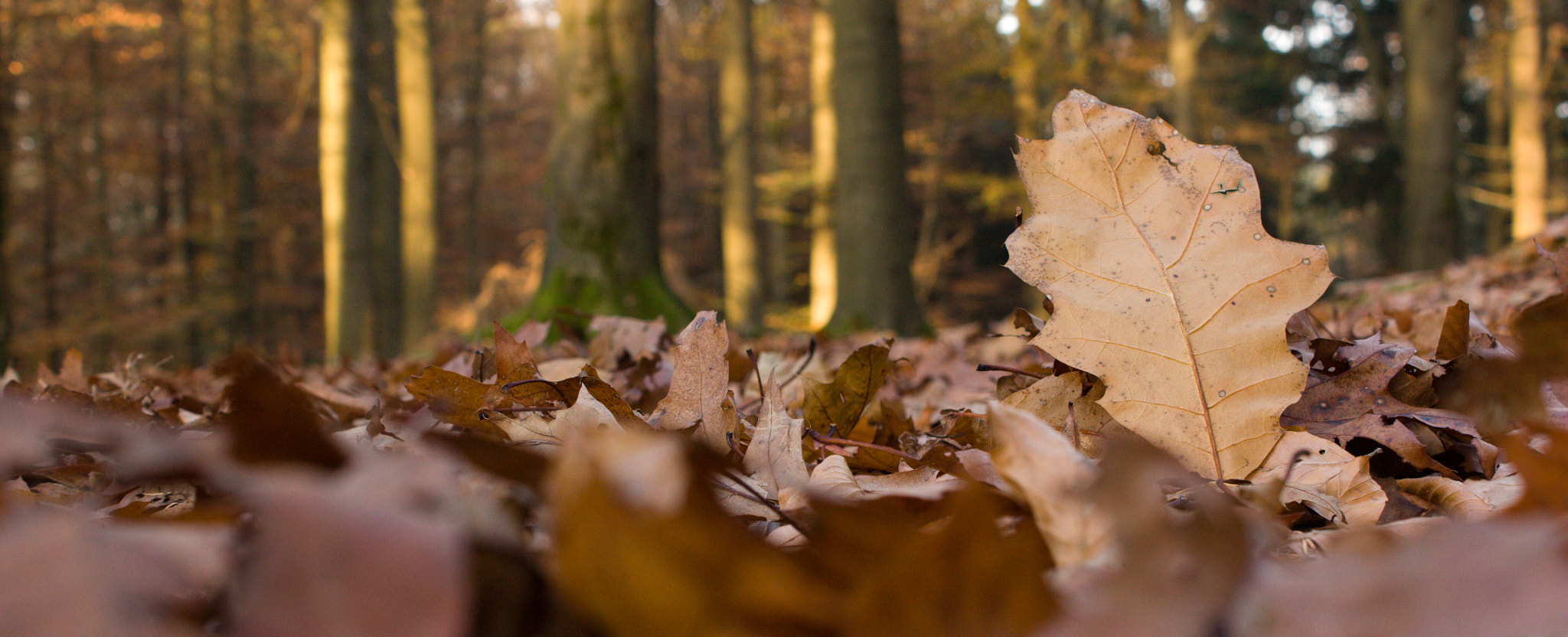 Photograph Autumn Impression by Marco B on 500px