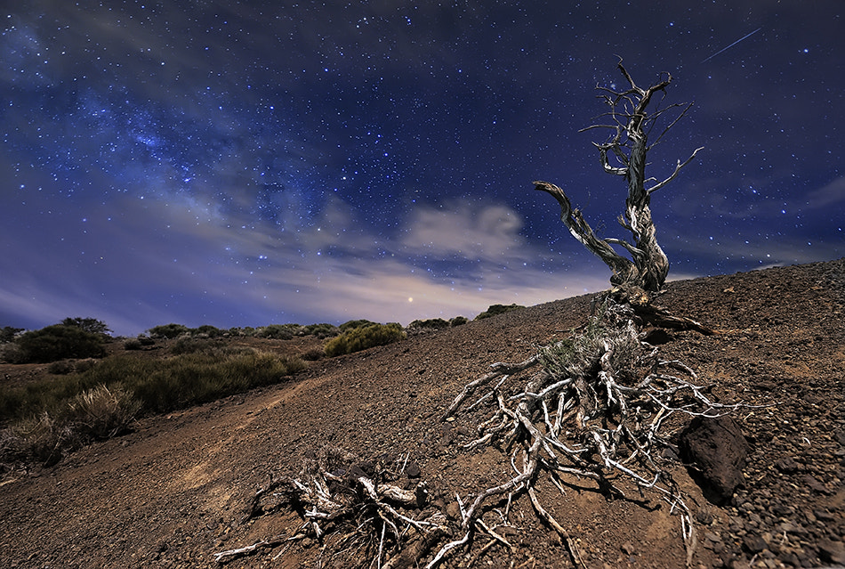 Photograph Tree under the stars by Andrea Auf dem Brinke on 500px