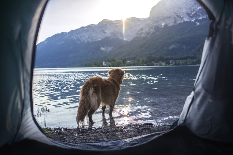 Camping with man´s best friend by Anne Geier on 500px.com