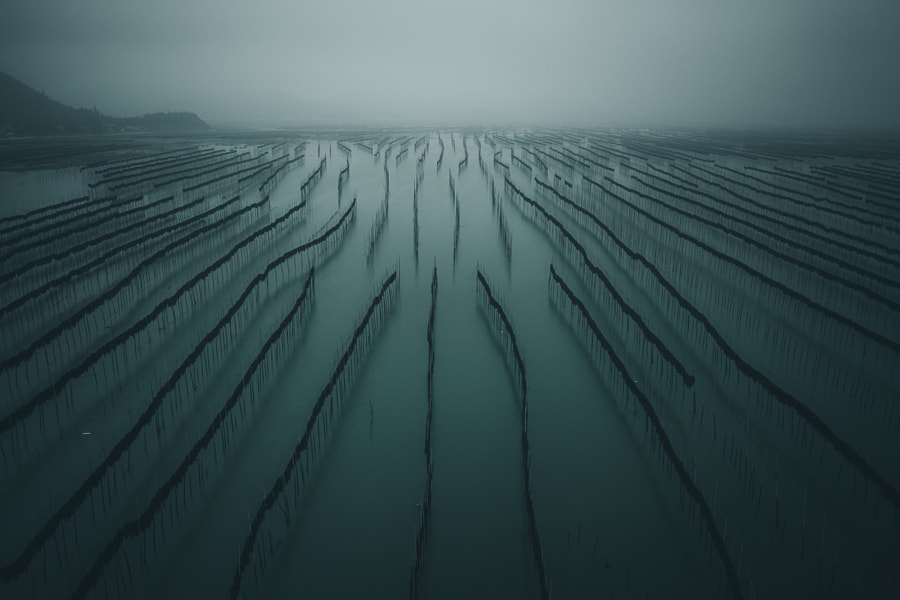Lines of seaweed by Tobias Hägg on 500px.com