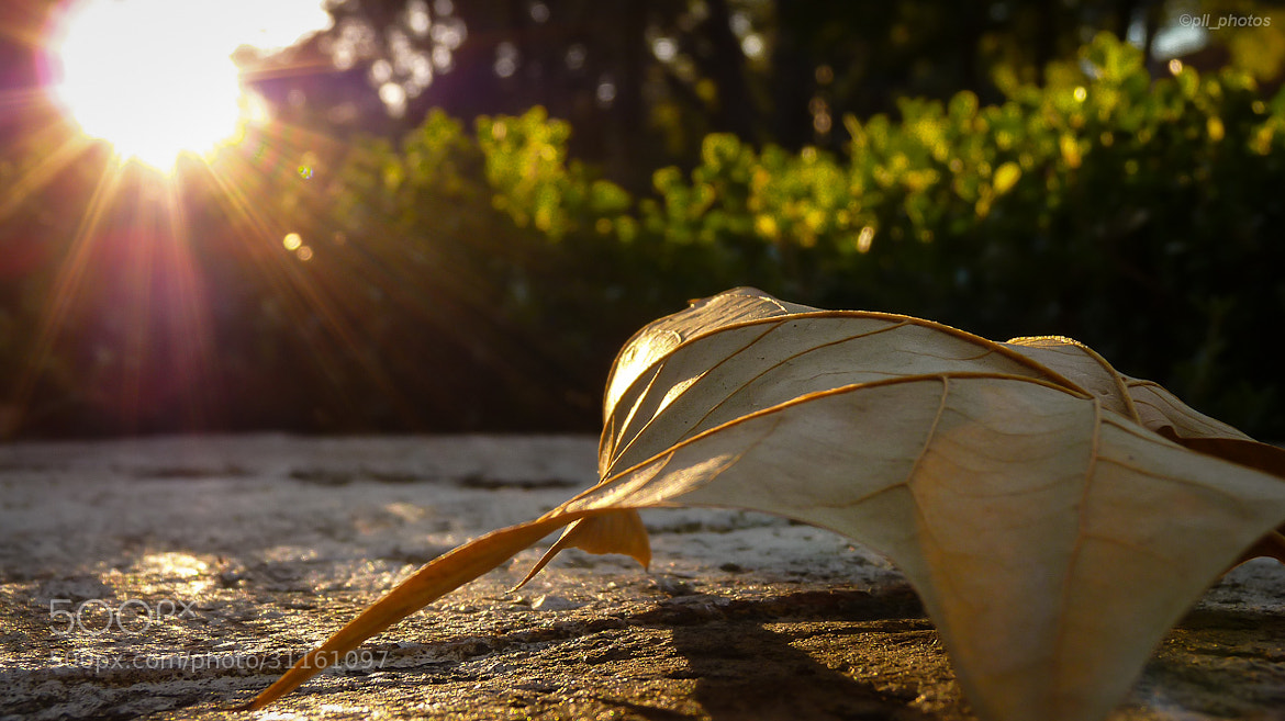 Photograph Light rays by Paulo Luft on 500px