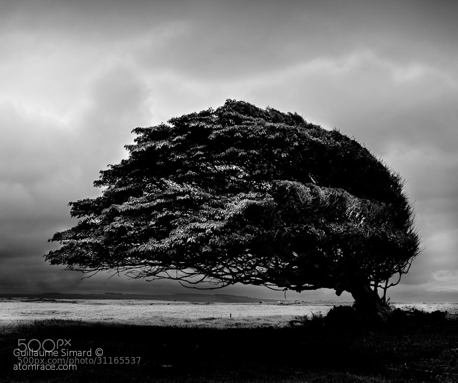 Photograph Born in the wind by Atomrace .com on 500px