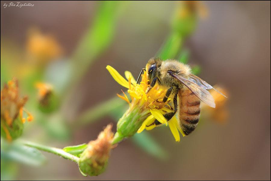 A Bee № n