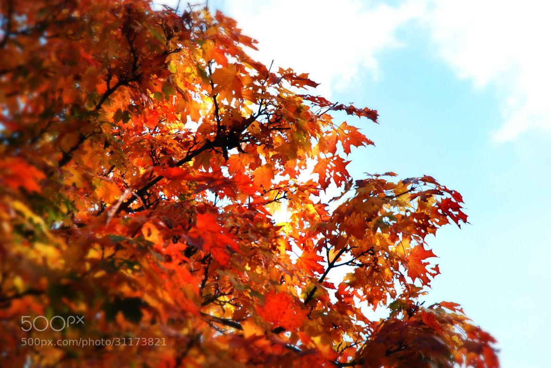 Photograph Autumn's Here  by JB Nuska on 500px