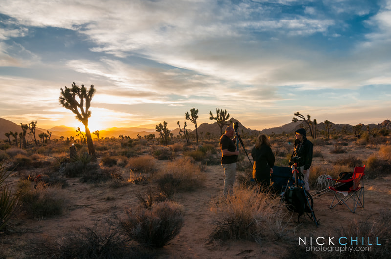 Photograph Joshua Tree at Sunset by Nick Chill on 500px