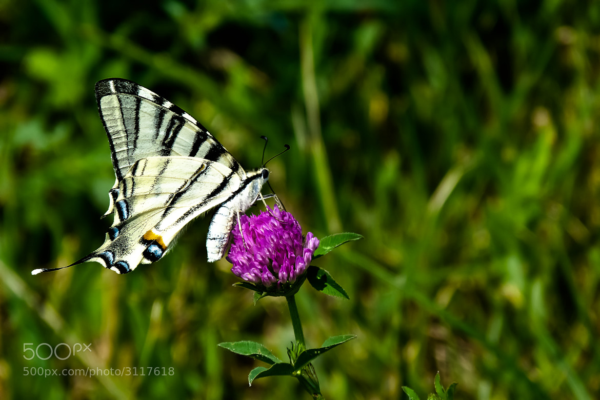 Photograph Little butterfly by Rucsandra Calin on 500px