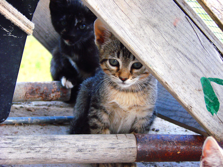 Photograph Cat by Jose Antonio Espejo on 500px