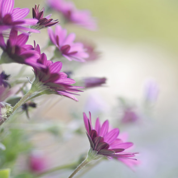Photograph Pink by Viviane Nathan on 500px