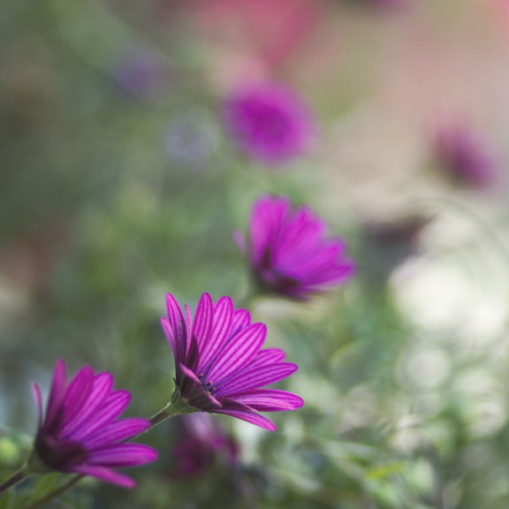 Photograph Pink (2) by Viviane Nathan on 500px