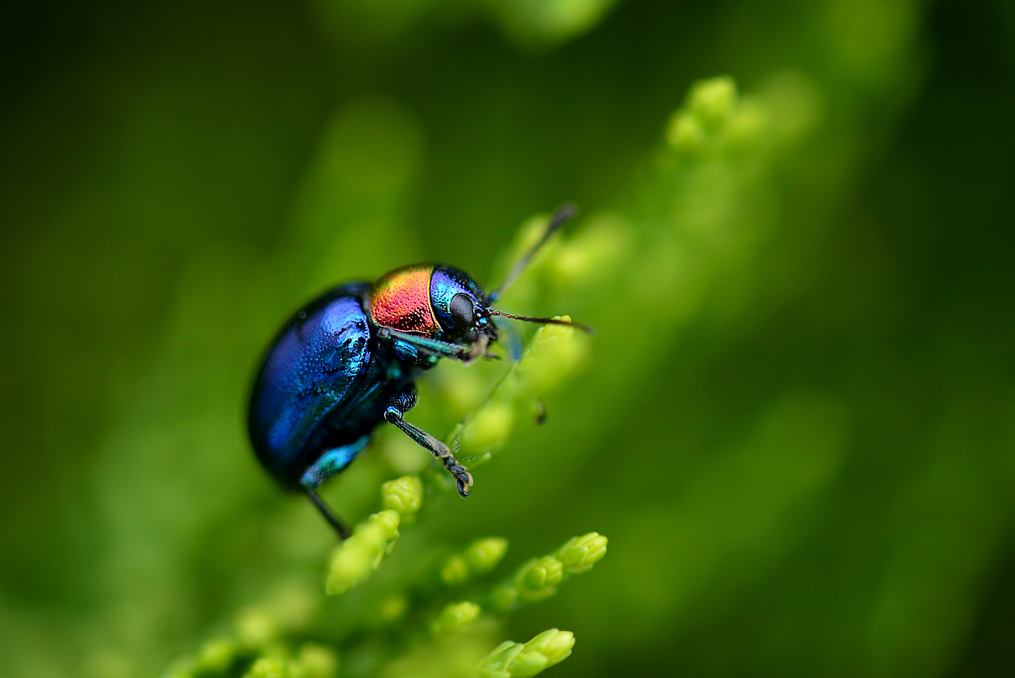 Photograph Bug's Life by Vichaya Pop on 500px