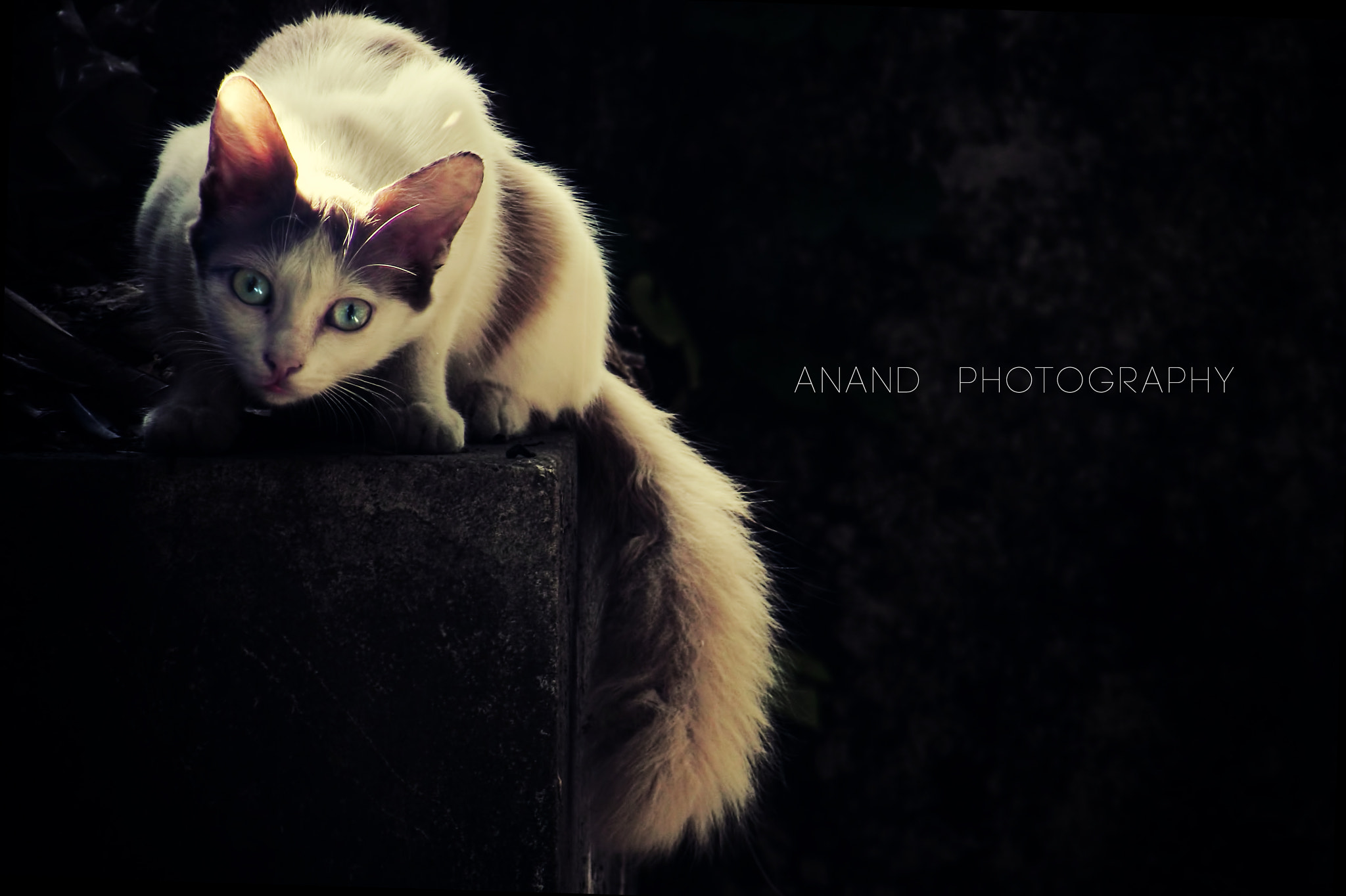 Photograph The Epic Stare by Anand Gopakumar on 500px