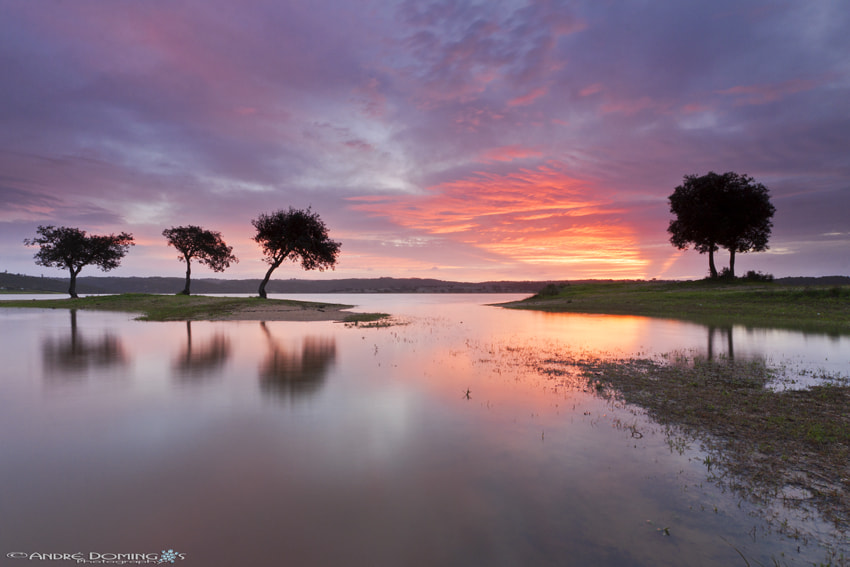 """Photograph """" Sharing the sunrise """" by André  Domingos on 500px"""