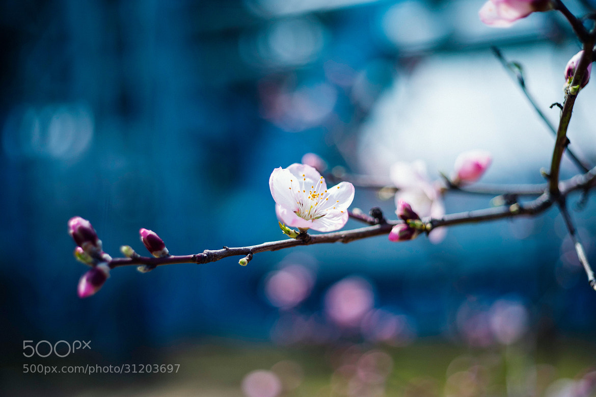 Photograph Dreaming of Almonds by moaan  photography on 500px