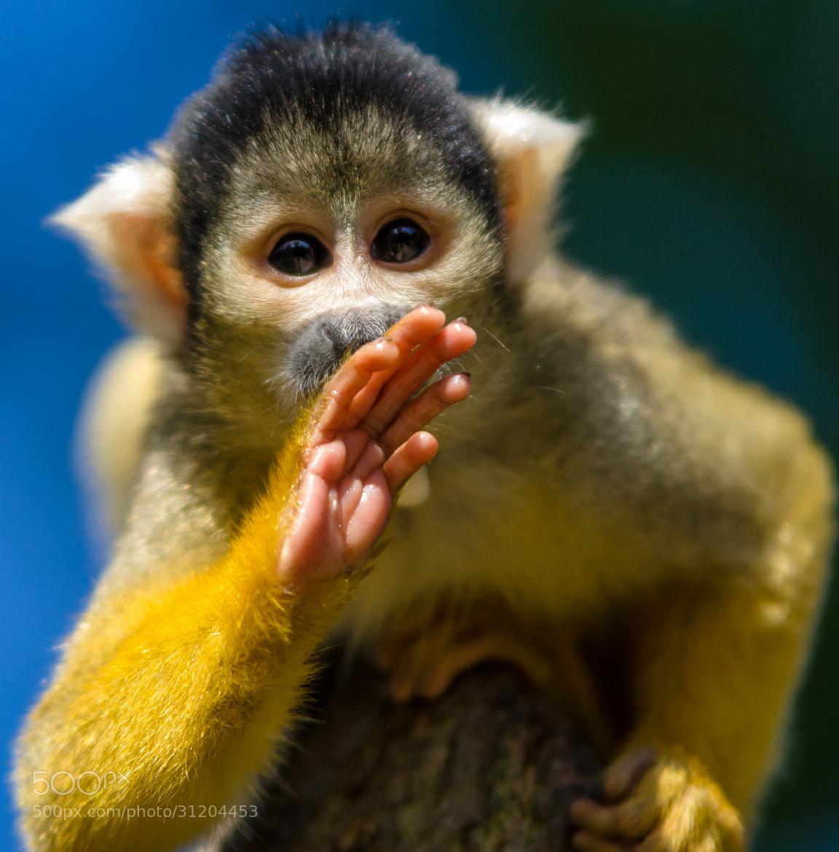 Photograph Monkey  by Adam Belkheir on 500px