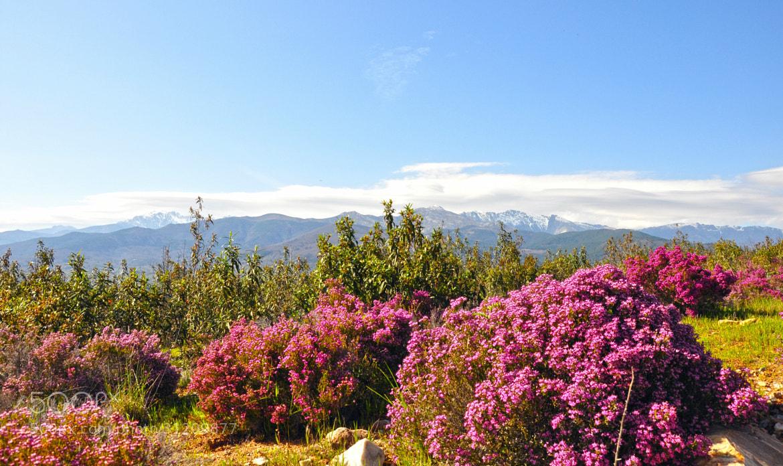 Photograph Colores de primavera by Mercedes Salvador on 500px