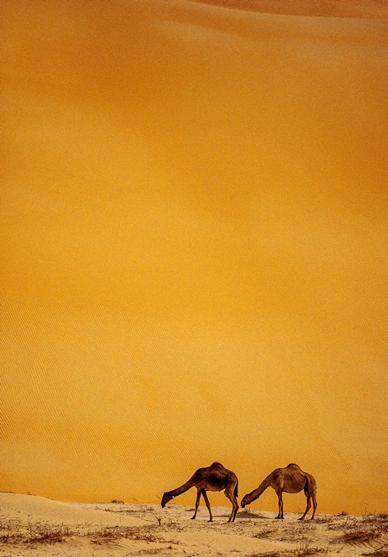 Photograph My eyes are always on the golden desert by Adeeb Alani on 500px