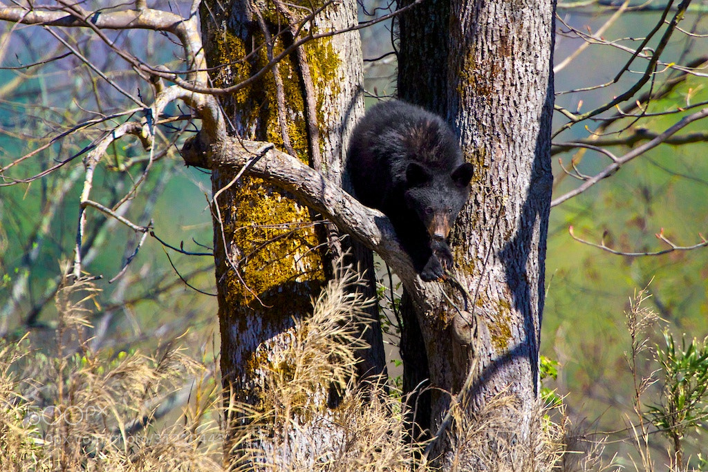 Photograph Sneaking Down!!! by Buck Shreck on 500px