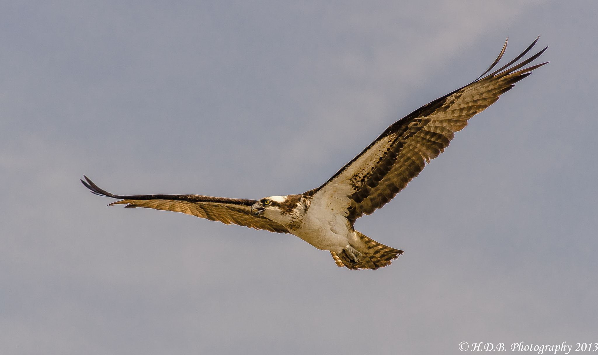 Photograph Wingspan by Harold Begun on 500px