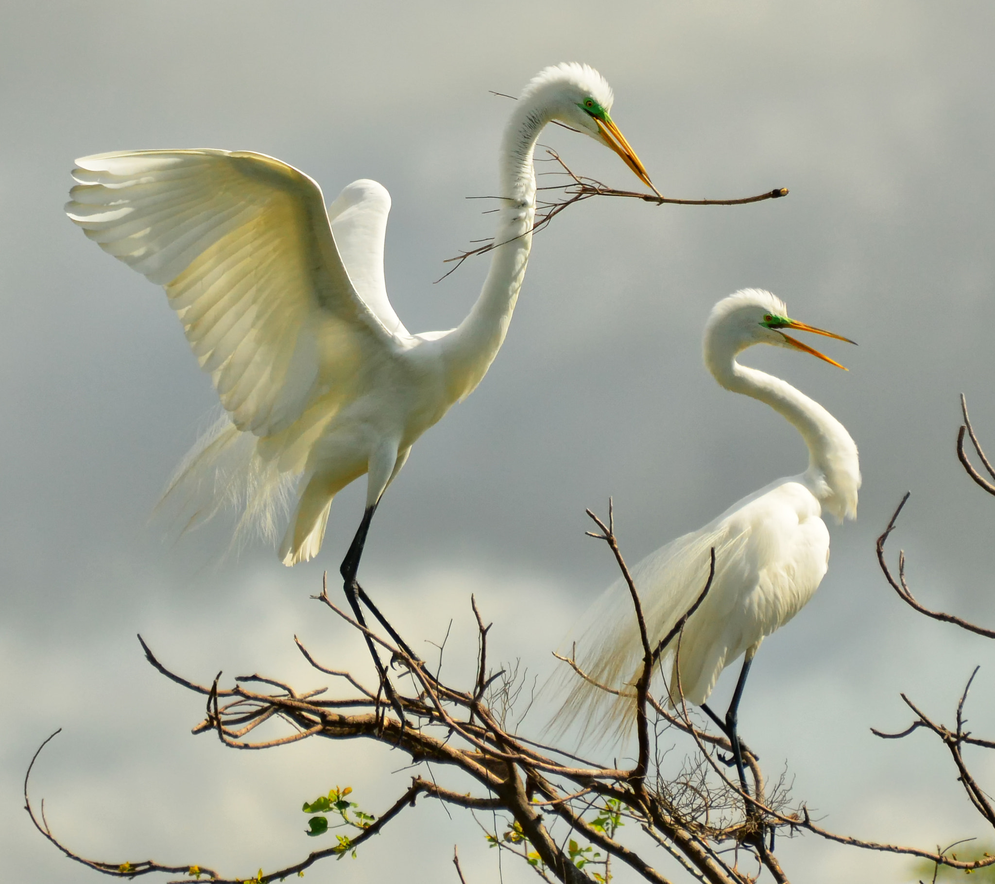 Photograph Creating a Nest by Jeff Clow on 500px