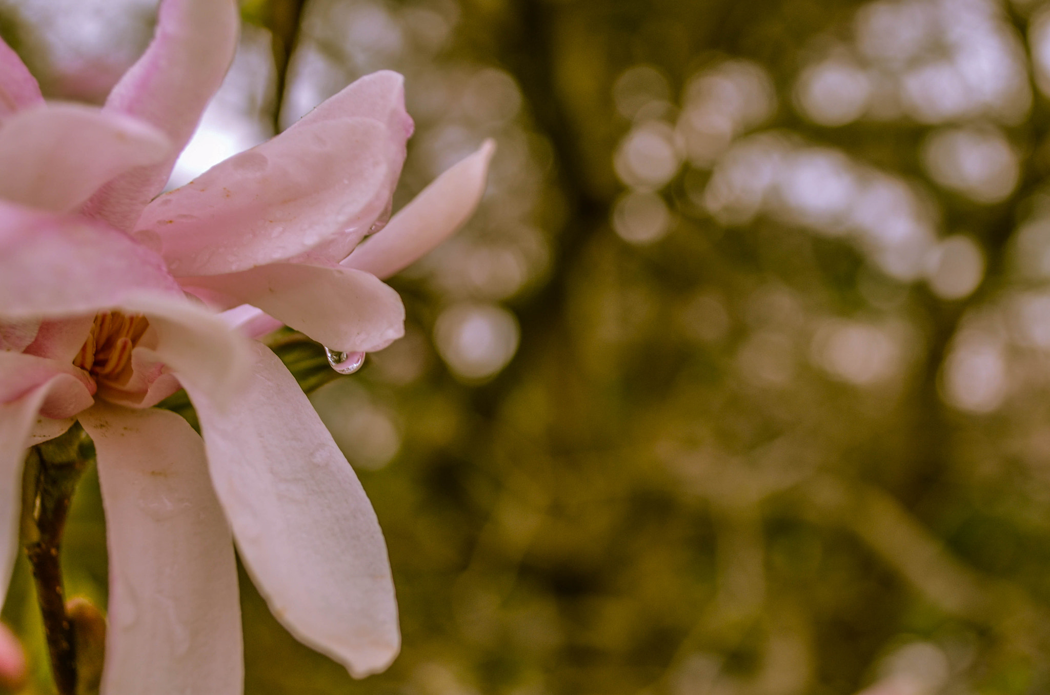 Photograph Spring is here... by Hetal Vora on 500px