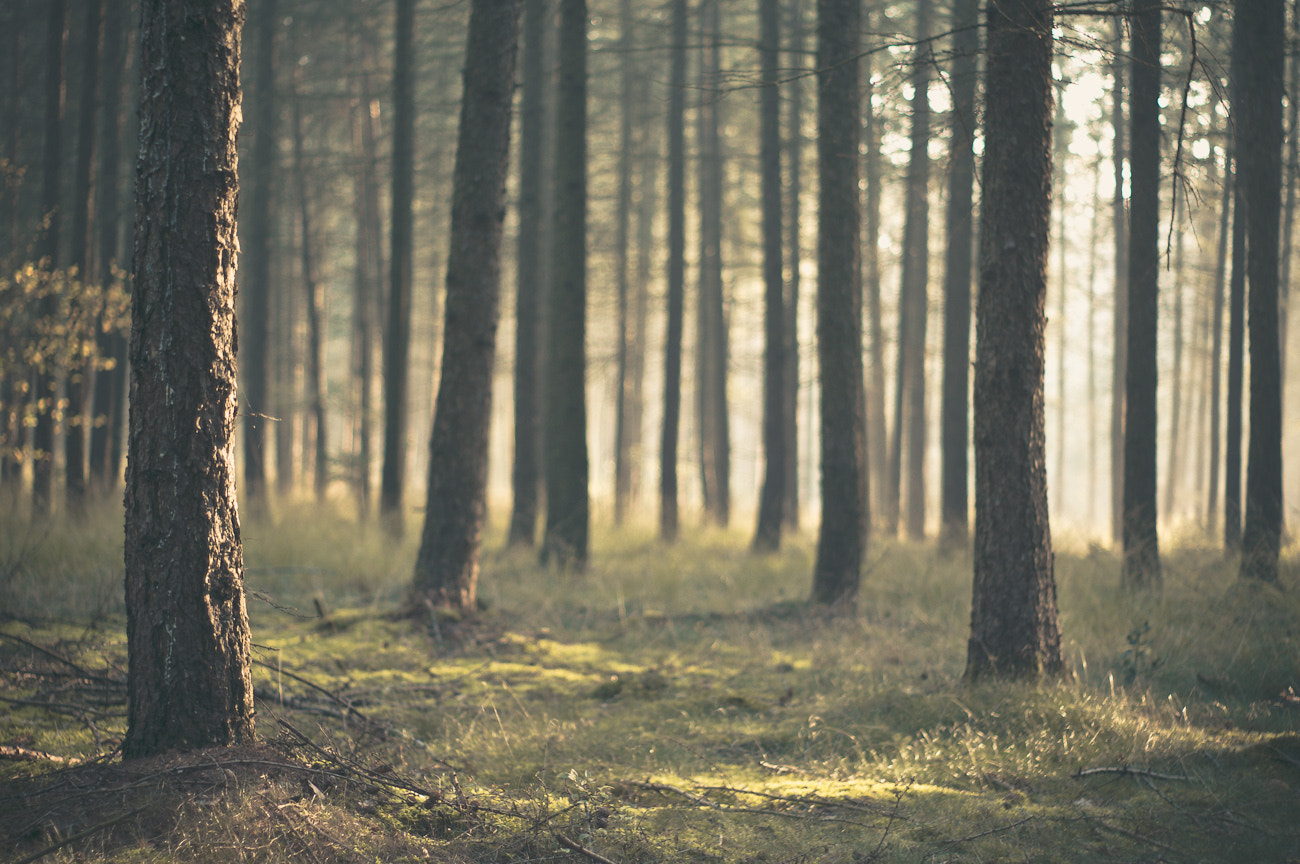 Photograph Monday morning in the forest by Kai Rauer on 500px