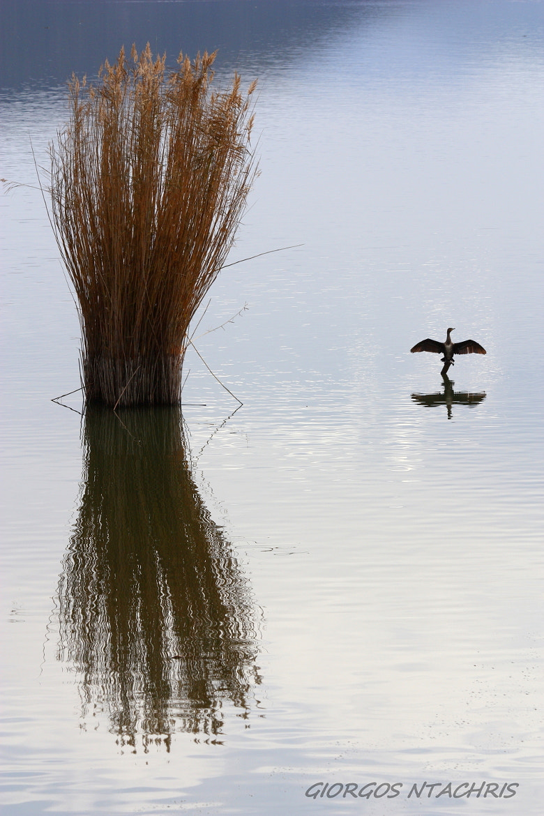 Photograph REFLECTION by Giorgos  Ntachris on 500px
