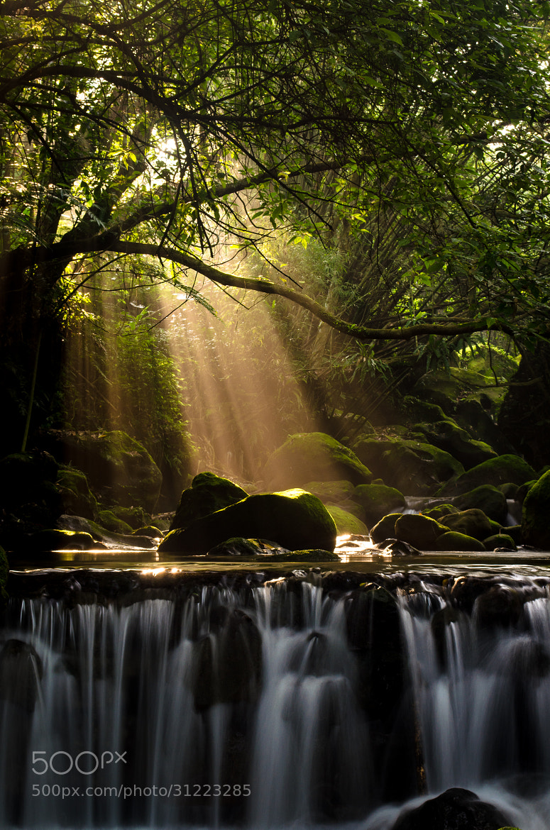 Photograph Light by Jackie Yeh on 500px