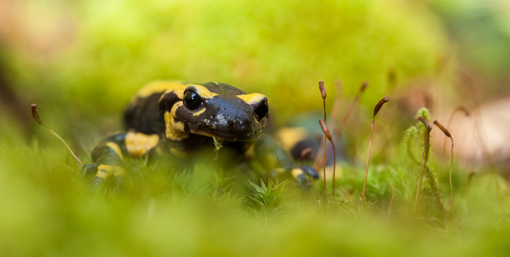 Photograph Into the moss by Marc Pihet on 500px