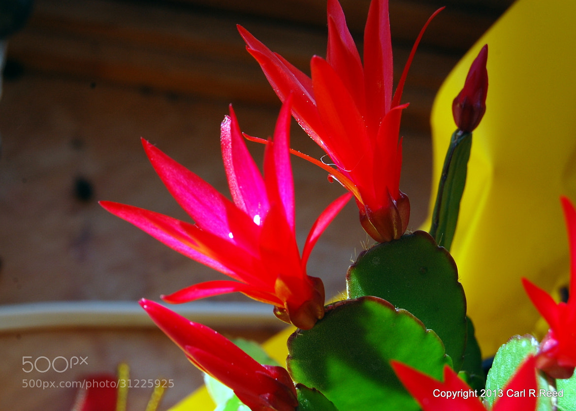 Photograph 4145-cati flowers side by Carl Reed on 500px