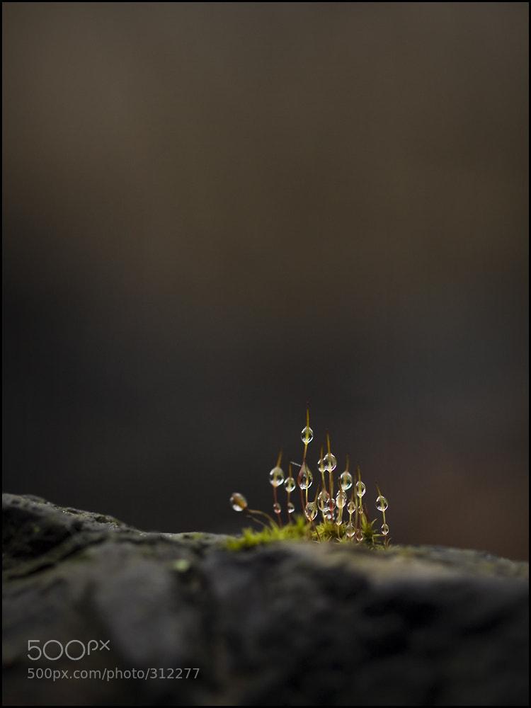 Photograph Drops by Zoltan Görögh on 500px