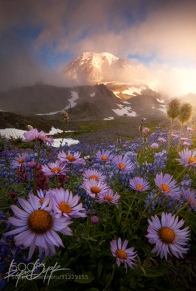 Photograph Weather the Storm by Ryan Dyar on 500px