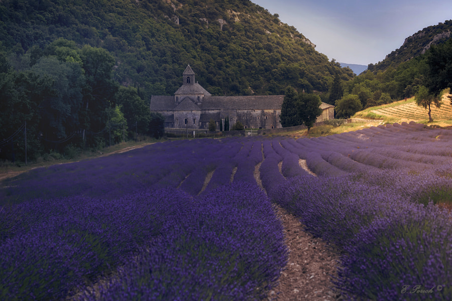 Abbaye Notre Dame Senanque by Enric Perich on 500px.com
