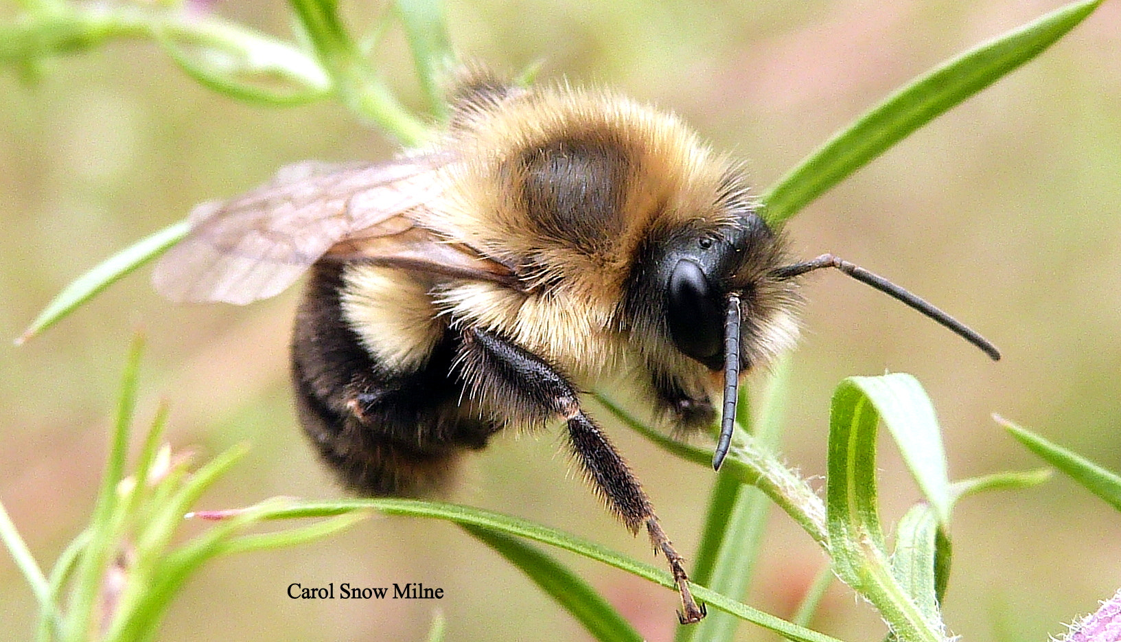 Photograph What's all the Buzz? by Carol Snow Milne on 500px