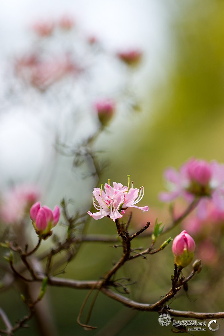 Photograph Flowers by Marc A. Hohenleitner on 500px