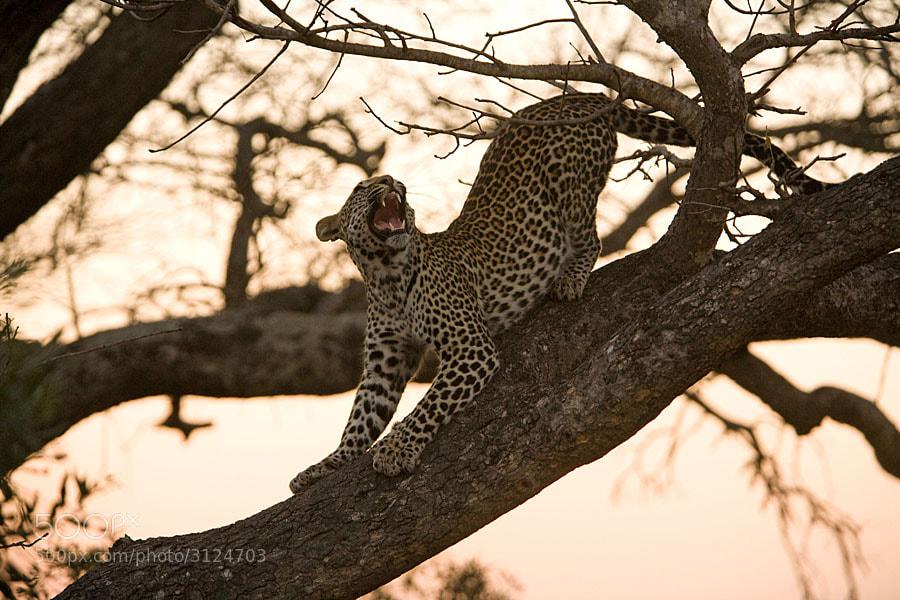 Photograph Yawn at dawn by Jochen Van de Perre on 500px